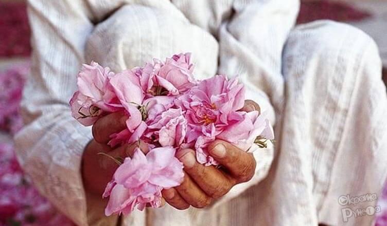 Как собирать лепестки роз